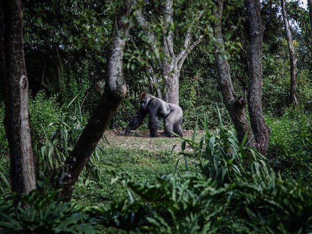Парадокс очевидности. Как увидеть гориллу